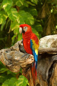 Colourful parrot — Stock Photo
