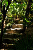 Palms and staircase — Stock Photo