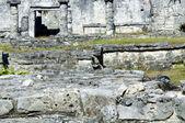 Maya piramit — Stok fotoğraf