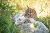 Grey cat is enjoying nature — Stockfoto