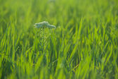 Close up of fresh grass with water drops — Stock Photo