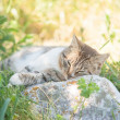 Grey cat is enjoying nature — Stock Photo #31518267