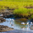 Wood Storks — Stock Photo #12655436