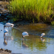 Stock Photo: Wood Storks