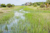 Wetlands Of South Carolina — Stock Photo