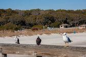 Seagull en duiven — Stockfoto