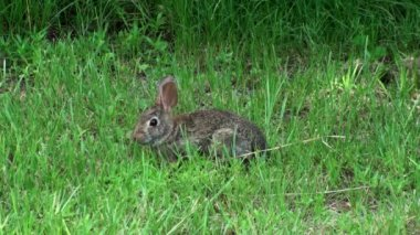 Bunny Rabbit In The Wild — Stock Video