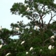 Birds flying in and out of tree — Stock Video #38783835