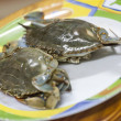 Blue sea crab — Stock Photo