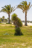 Baby palm tree growing up — Stock Photo