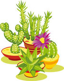 Set of Cactuses — Stock Vector