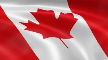 Canadian flag in the wind — Stock Video