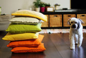 Home environment. Colorful pillows and dog. Soft focus. — Stock Photo