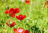 Primeras flores de primavera — Foto de Stock