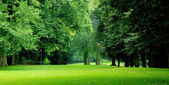 Green trees in city-park — Stock Photo