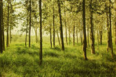 Summer forest. Photo in old image style. — Stock Photo