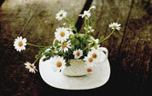 Spring daisies on white cup. old style image photo. — Stock fotografie