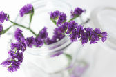 Branches of purple flowers — Stock Photo