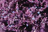 Fialové květinové pozadí — Stock fotografie