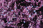 Purple floral background — Stock Photo