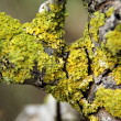 Green moss on the tree — Stock Photo #39901273