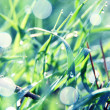 Soft green grass background — Stock Photo #39901523