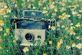 Old vintage camera in chamomile field — Stockfoto
