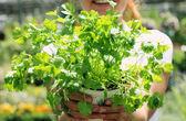 Woman with parsley — Zdjęcie stockowe