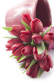 Bouquet of red tulips on white background — Stock Photo