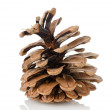 Pine cone isolated — Stock Photo