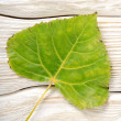 Poplar leaf on a wooden background — Stock Photo
