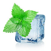Ice cube and mint — Stock Photo