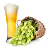 Beer and hop in basket — Stock Photo