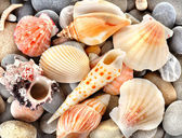 Stone and sea shells — Stock Photo