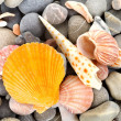 Starfish and sea shells — Stock Photo