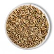 Fennel  in plate isolated - Foto Stock