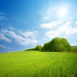 Field of grass and trees — Stock Photo