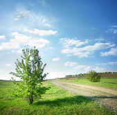 Tree near a country road — Stock Photo