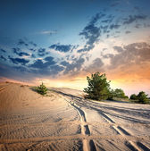 Country road in the desert — Stock Photo