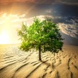 Green tree in the desert - Stock Photo