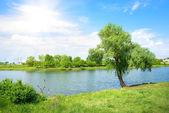 Strom a jezero — Stock fotografie