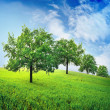 Trees in field — Stock Photo #25464877