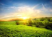 Green fields of grass — Stock Photo