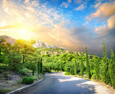 Cypress park in mountains — Stock Photo