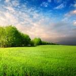 Cloudy sky in grassland — Stock Photo