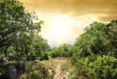 Sunlight in mountain forest — Stock Photo