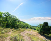 Footpath to the sea through the forest — Stock Photo