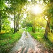 Stock Photo: Road in birch forest