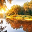 River in a delightful autumn forest — Stock Photo