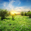 Sunny meadow with flowers — Stockfoto